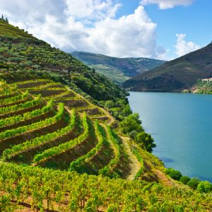 Vineyards in the Valley of the River Douro, Portuga