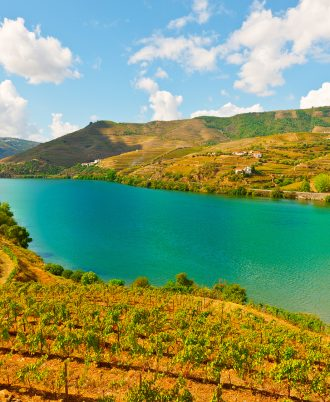 Vineyards in the Valley of the River Douro, Portugal. Private Tour