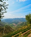 Douro Valley Small Group Tour