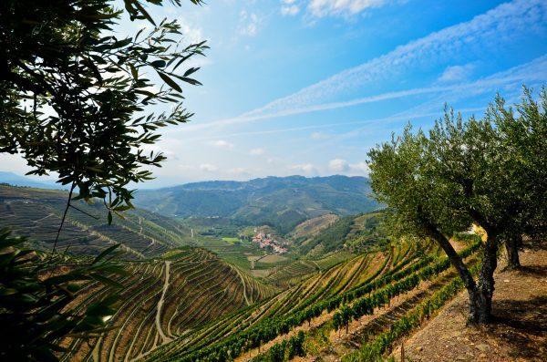 Douro Valley Small Group Tour