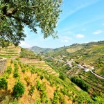 Douro valley tours for wine lovers