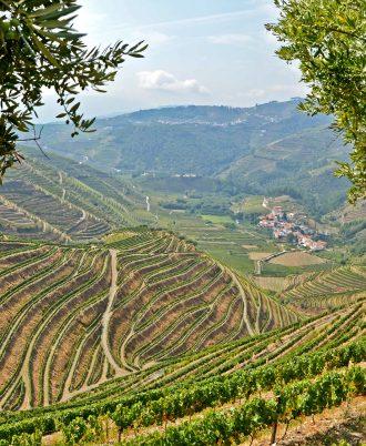 Douro Valley - Weinbau-Terrassen bei Peso da Regua, Portugal