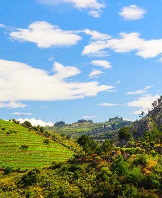 vineyard hills in the river Douro valley, Portugal