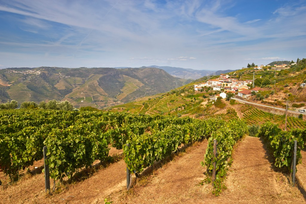 Douro Valley guided tour