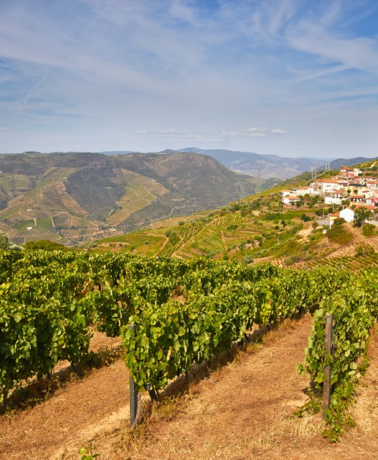 Douro Valley Private Guided Tour From Porto  Douro Valley Tours